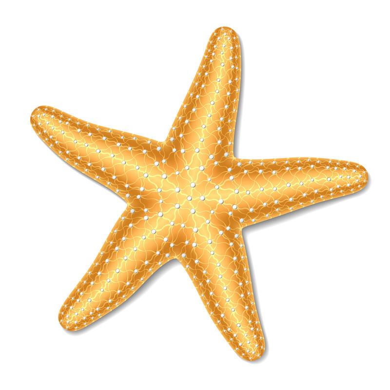 starfishlogo 190 starfish amy s something special clipart starfish bmp clipart starfish with sunglasses